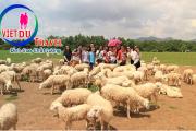 Tour Đồi Cừu – Vũng Tàu 2 ngày 1 đêm
