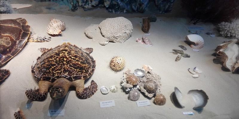 Tủ trưng bày cá thể rùa và các loài ốc biển ở Côn Đảo