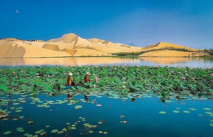 Bàu Sen Bàu Trắng - Tiểu Sa mạc đẹp số 1 Mũi Né - Như Sahara