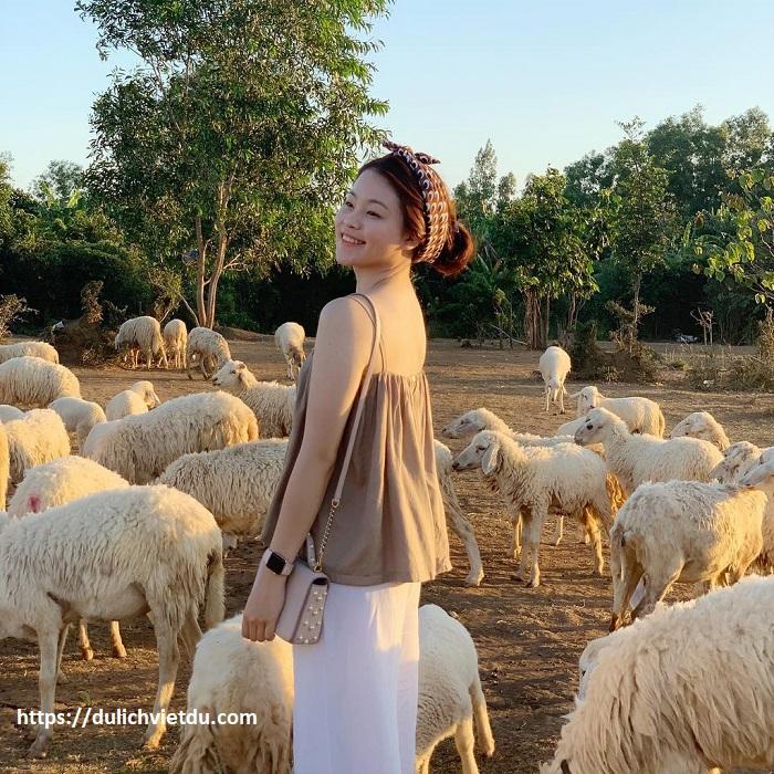Đồi Cừu Suối Nghệ Vũng Tàu