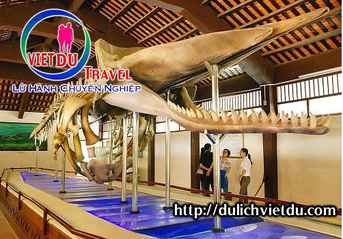Bộ xương cá voi tại Vạn An Thạnh
